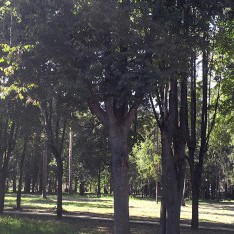Произведена оздоровительная обработка леса в КП Резиденция Рублево