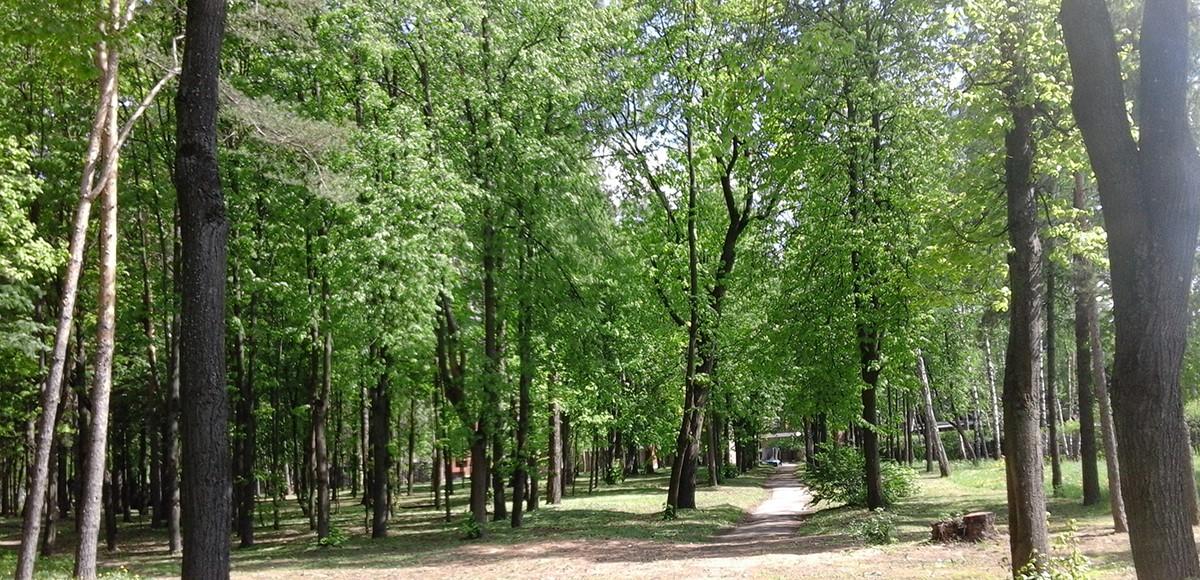 Лесопарковая зона КП Резиденция Рублево