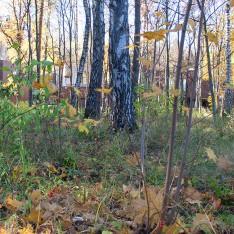 Лес на территории поселка в Резиденции Рулево