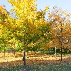 Осень в Резиденции Рублево