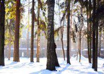 Зимный лес в «Резиденции Рублево»