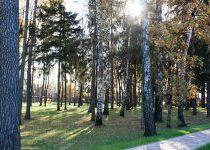 Осенний лес, «Резиденция Рублево», 2016